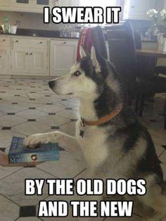 Es gracioso porque DOGS/GODS… y es una frase de Juego de Tronos… en fin bueno JA JA JA