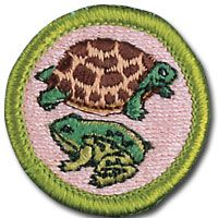 Reptile and Amphibian Study - MeritBadgeDotOrg