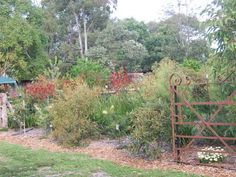 I love West Australian native gardens and can't wait for mine to grow into t. I love West Aust Small Backyard Gardens, Big Garden, Garden Spaces, Outdoor Gardens, Garden Plants, Garden Ideas Australia, Australian Native Garden, Australian Flowers, Landscaping On A Hill