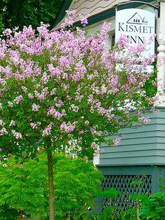 The Kismet Inn in springtime colors!