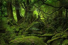 Yakushima: this island off the coast of Kyushu (the southernmost island of the main island corridor) in Japan - is certainly a sight to behold. It will take some perseverance to get there - but this ancient cedar forest filled island has been a world Heritage Site since 1993.
