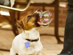 20.) Bubbles: a dog's best friend.