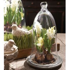 Hyacinth on Plate under Glass Dome Small