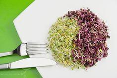 Mi-fan-terem-a-csira-I-resz_ Edible Plants, Cabbage, Vegetables, Kids, Children, Boys, Veggies, Cabbages, Vegetable Recipes