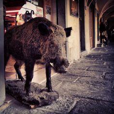 Friends of Mine. #toscana #tuscany #tuscanygram #chianti #instavaldarno #greve | by gi_so