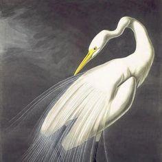 John James Audubon's art