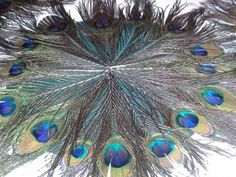 Peacock Placematts, 35% off   Recycled Bride
