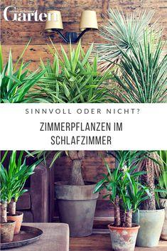 200 best Indoor: Pflanzen, Pflege, Tipps images on Pinterest