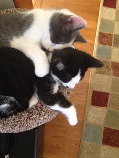 Update: Einstein and Snuggles  They are doing great.  Very playful, curious and social.