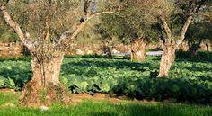 Les monocultures intensives du 20e siècle ont banni les arbres du paysage agricole. Pourtant, associé aux cultures, l'arbre est capable d'améliorer à la fois la qualité de la production et le rendement. Il est en fait le meilleur ami du paysan. Et s'il est l'ami du paysan, il est aussi l'ami du climat ! L'agroforesterie qui s'implante à nouveau dans les cultures le prouve. Ancestrale et résolument moderne