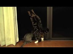Maru and Hana are intrigued by an insect on the other side of the screen door.
