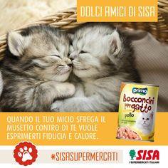 #SISAsupermercati #4zampe   I gatti sono animali dolci ma riservati, intelligenti ma non obbedienti, autonomi e allo stesso tempo bisognosi di cure e di affetto.  #gatti #pets #cats