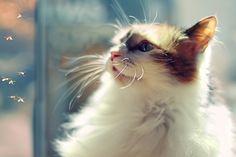 Едят ли кошки мошек? едят ли мошки кошек? by Tatyana Kirsanova on 500px