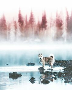 https://www.instagram.com/p/Bc3CH-ZlQd8/ Pic: @jude_allen  #lake #shore #trees #woods #forest #nature #dog #wolf #dogs  #travelwriter #travel #instatravel #travelgram #tourism #instago #passportready #travelblogger #wanderlust #ilovetravel #writetotravel #instatravelling #instavacation #instapassport #postcardsfromtheworld #traveldeeper #travelstroke #travelling #trip #traveltheworld #igtravel