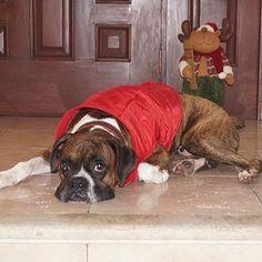 Discover The Patient Boxer Pup Health Boxer Bulldog, Boxer Puppies, Boxer And Baby, Boxer Love, Heart Boxers, Boxer Rescue, Cute Little Animals, Mans Best Friend