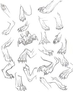 How to draw a cat nose 37 Ideas Drawing Poses, Drawing Sketches, Cool Drawings, Animal Sketches, Animal Drawings, Dragon Anatomy, Werewolf Art, Dragon Sketch, Creature Drawings