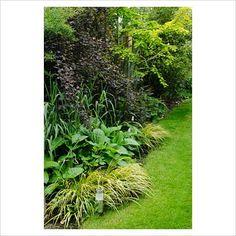 Shady border with grasses, persicarias, physocarpus opulifolius 'diabolo' and metasequoia glyptostroboides 'gold rush'