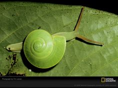 National Geographic has the best pictures!
