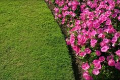 This is what you want your garden to look like, right? Fertilize and treat weeds! We have great deals on Nitro-Phos Check out these deals. Ficus, Landscaping Images, Stock Foto, Flower Beds, Botany, Horticulture, Green Leaves, Paths, Lawn