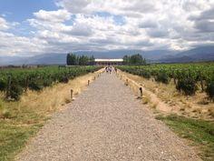 Vignoble Salenstein dans la valle de Uco près de Mendoza en Argentine Blog Voyage, Mendoza, Country Roads, Travel, Buenos Aires, Argentina, El Calafate, Vineyard, Viajes