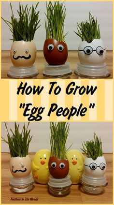 How to grow 'egg people' by planting in empty eggshells