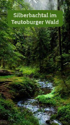 Die 30 besten Bilder von in den Wald   Foto natur