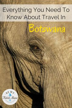 If you love animals, then Botswana is for you! Here's everything you need to know about the best safari destinations in Botswana so that you can see elephants, hippos, alligators, and more!