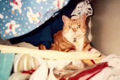 Kara keeping warm, in the airing cupboard.