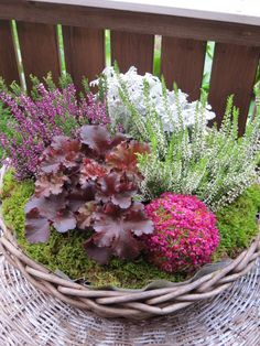 herbstgestecke Making your apartment furniture livable Article Body: Whenever you move in to a new a Container Gardening Vegetables, Container Plants, Hydrangea Shade, Plants That Love Shade, Winter Planter, Winter Flowers, Plantation, Back Gardens, Garden Planters