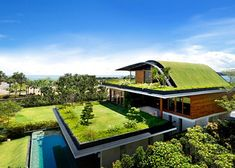eco house... Green roof... Amazing!