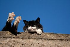 """""""A cat is a puzzle for which their is no solution."""" --Hazel Nicholson"""