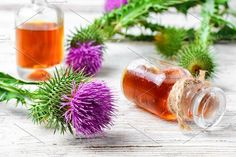 Medicinal extract of milk Thistle by MLunov on @creativemarket