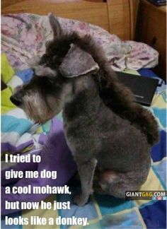 Pictures of the week, 30 pics. I Tried To Give My Dog A Cool Mohawk