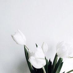 14 Hidden iPhone features on We Heart It Plant Wallpaper, Flower Wallpaper, Flower Aesthetic, White Aesthetic, White Tulips, White Flowers, White Tulip Bouquet, My Flower, Flower Power