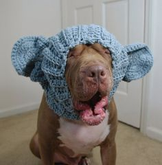How Cute is he! Dog Snood Elephant Crochet Large