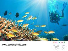 EL MEJOR ALL INCLUSIVE AL CARIBE. Durante las próximas vacaciones con tus amigos, seguro querrás divertirte en grande con todos ellos. En Booking Hello les aseguramos que hacer una excursión de buceo e inmersión en Punta Cana, será una gran experiencia y otra forma de apreciar la belleza del Caribe. Los lugares más recomendables para la práctica de esta actividad son Bayahíbe e Isla Catalina. ¡Adquiere hoy mismo tu pack! #elmejorpaquetealcaribe