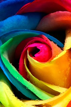 I still don't understand how they do this, but these rainbow roses are gorgeous!  I would never have believed it if I hadn't seen a dozen of them with my own eyes!  Each individual petal is a different solid color!