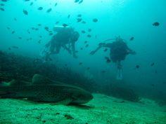 Shark? What shark..Scuba diving Phi Phi Islands Phuket Thailand. #Phuket #Thailand #Scuba #Diving #Golf