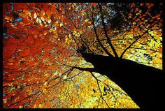 Image result for trees images