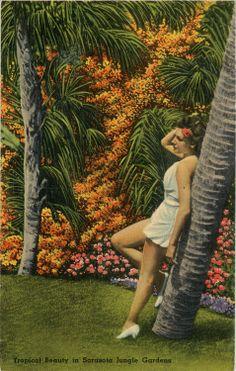 Tropical Bathing Beauty Sarasota Jungle Gardens Vintage Florida Postcard, $5.00