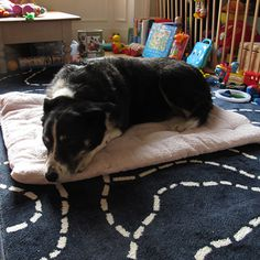 A Dog Bed Made From An Old Towel - A Tutorial From Milomade. Upcycle some old towels into comfy dog beds that can be used in the house, the car, on holiday. Easily rolled up and stored. Bung in the washing machine if they get dirty. Really quick and easy to make.