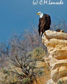 Eagle Rock.  Summit County, Utah.