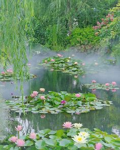 Gifu Prefecture, Japan . 9,000 miles away from Monet's Giverny, is this nameless pond, located deep in the mountains of the Gifu Perfecture. The waterlilies, so beautiful and similar to the ones made famous by the Father of Impressionism, that this no-name pond is now informally known as Monet's Pond.