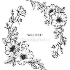 Descargar - Flor color de rosa salvaje. Dibujo y dibujo con línea blanco y negro-arte — Ilustración de Stock #169912080