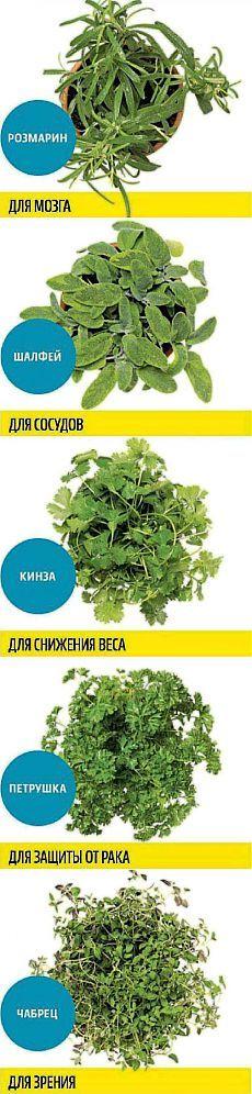 Какую зелень можно выращивать круглый год на подоконнике, чтобы быть здоровым