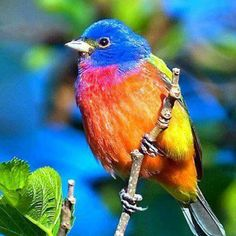 Aves Brasil  #bird #birds #colorfulbirds