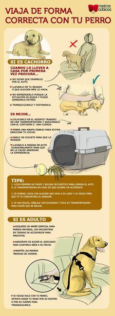 ¿ Realmente sabes como debes transportar a tu perro ?.. Lee esto.