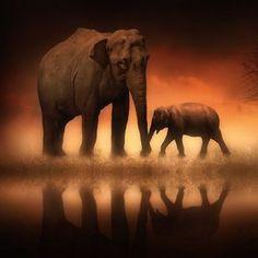 The Elephants at Dusk by Jenny Woodward