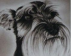 Schnauzer Dog Print - Pencil Drawing