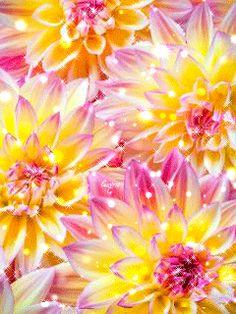 Dahlia oh dahlia.dahlia all my life Amazing Flowers, Beautiful Flowers, Beautiful Gorgeous, Exotic Flowers, Simply Beautiful, Flower Power, Deco Floral, Gras, Dream Garden